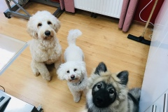 Sammy & Freunde