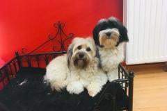 Freddy & George