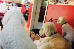 Nala & Simba warten auf Frauchen/ Herrchen