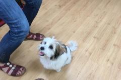 Eddy's erster Besuch im Hundesalon